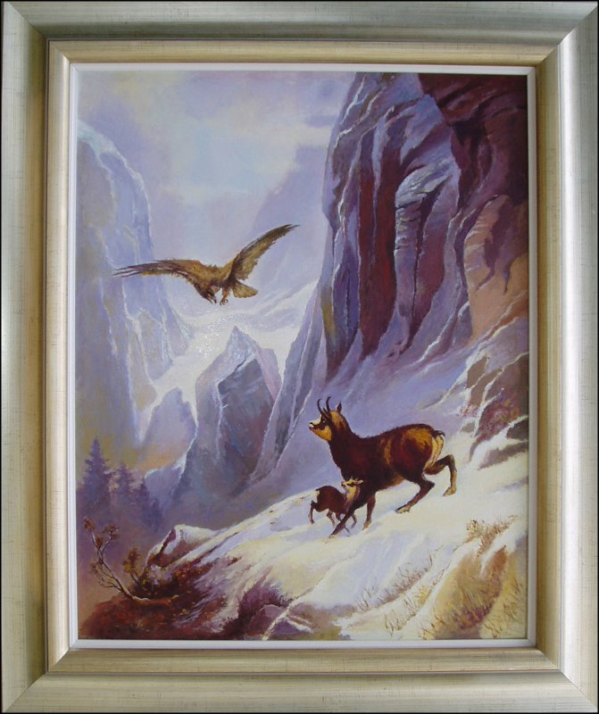 Buy Eagle attack on Alpine chamois
